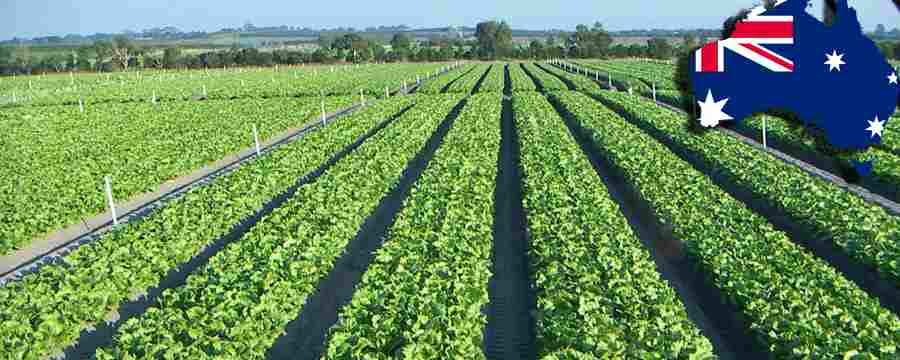 خرید مزرعه در استرالیا